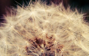 Picture macro, light, dandelion