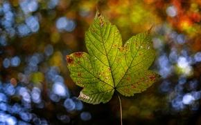 Wallpaper autumn, nature, sheet, bokeh
