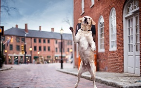 Picture street, dog, Dancin' in the Streets