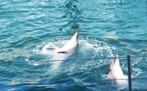 Picture water, dolphins, Dolphinarium