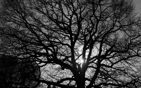 Picture light, branches, nature, tree, black and white