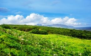 Picture greens, summer, grass, clouds, flowers, hills, field