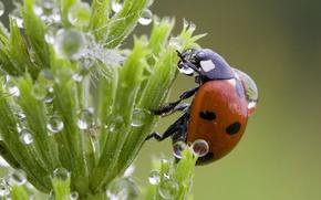 Wallpaper grass, drops, ladybug