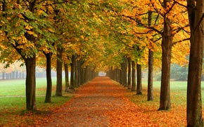 Picture autumn, nature, Park, alley, chestnuts
