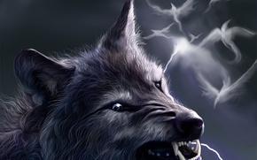 Picture birds, fantasy, lightning, wolf, grin, werewolf