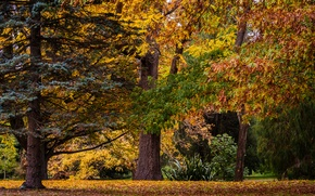 Picture autumn, forest, trees, nature, New Zealand, Botanic Gardens, Christchurch
