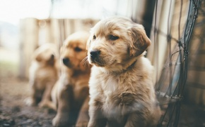 Picture puppies, fluffy, bokeh, Puppies