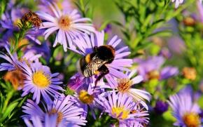 Picture flower, heat, bumblebee