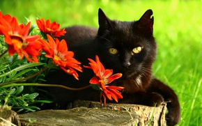 Picture cat, eyes, cat, look, face, flowers, pose, green, background, tree, black, portrait, garden, red, lies, …