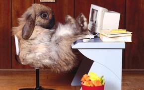 Wallpaper office, rabbit, workplace, computer