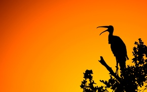Picture light, sunset, nature, bird, branch, silhouette
