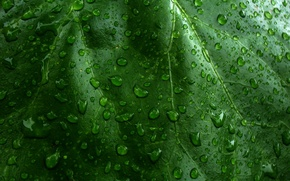Wallpaper sheet, Green, drops