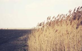 Picture grass, field, wind, countryside, farm, farmland
