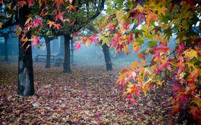 Picture autumn, leaves, fog, garden