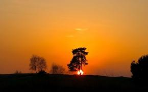 Wallpaper tree, shadow, sunset