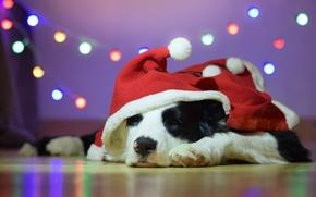 Picture dog, hood, Santa, garland