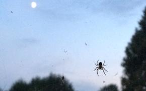 Picture web, spider, twilight