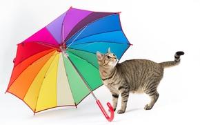 Wallpaper white background, umbrella, cat