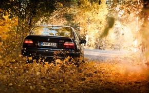 Picture leaves, lights, BMW, BMW, Black, E39, autumn