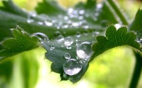 Wallpaper greens, drops, sheet