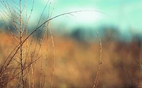 Picture macro, branches, background, widescreen, Wallpaper, vegetation, plant, blur, wallpaper, widescreen, background, full screen, HD wallpapers, …