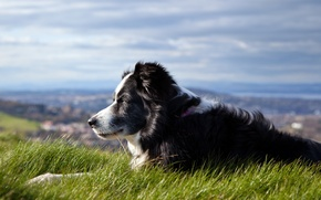 Picture the sky, grass, dog