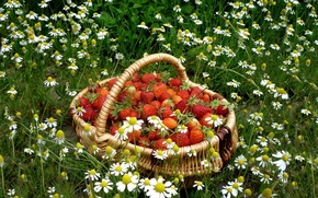 Wallpaper CHAMOMILE, STRAWBERRY, BASKET, RED, GRASS, FOOD, BACKGROUND