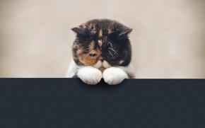 Picture look, Cat, Pudge the cat