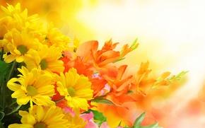 Picture flowers, gladiolus, bouquet.chrysanthemum