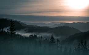 Picture trees, landscape, fog, mountain, beauty, Norway, forest
