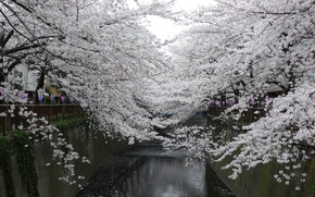 Wallpaper water, landscape, flowers, branches, cherry, Park, holiday, tenderness, beauty, spring, Japan, channel, Japan, white, park, ...
