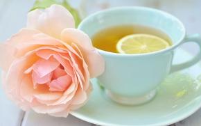 Picture flower, lemon, tea, pink, rose, Cup, saucer