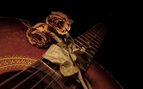 Picture flowers, guitar, roses