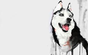 Picture language, figure, dog, watercolor, husky, husky