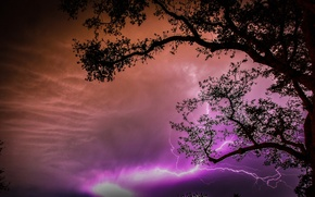 Picture the sky, clouds, night, tree, lightning, silhouette