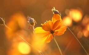 Picture sunset, flowers, glare, beautiful