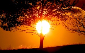Picture the sun, sunset, tree, shadow