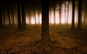 Picture forest, trees, nature, toyman