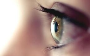 Picture brown, macro, eye