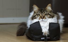Picture cat, cat, bag