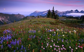 Picture grass, trees, flowers, mountains