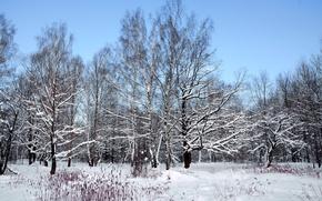 Picture winter, snow, nature, Landscape