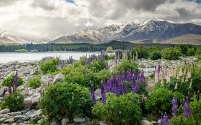 Wallpaper flowers, New Zealand, mountains