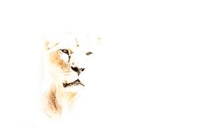 Picture nature, background, Leo
