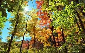 Picture autumn, the sky, leaves, rays, light, trees