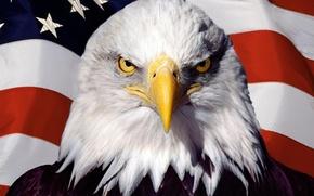 Wallpaper flag, America, USA, bird, eagle