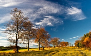 Picture autumn, forest, the sky, clouds, hills