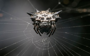 Wallpaper spider, monster, web, arachnid