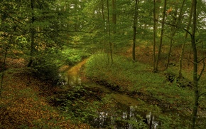 Picture forest, trees, stream, thickets