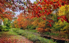 Picture autumn, forest, grass, leaves, trees, house, river, stream